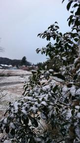 2016.2.25雪景色
