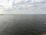 海浜公園からの景色